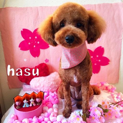 hasu 高丸