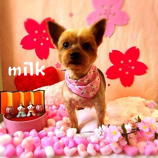 milk 福山
