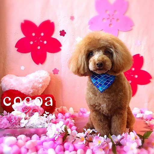 cocoa 山崎