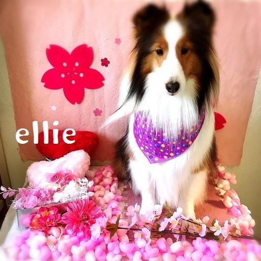 ellie 松宮
