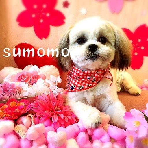 sumomo 木村