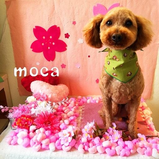 moca 松田