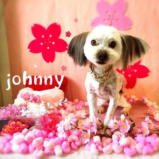 Johnny 酒井