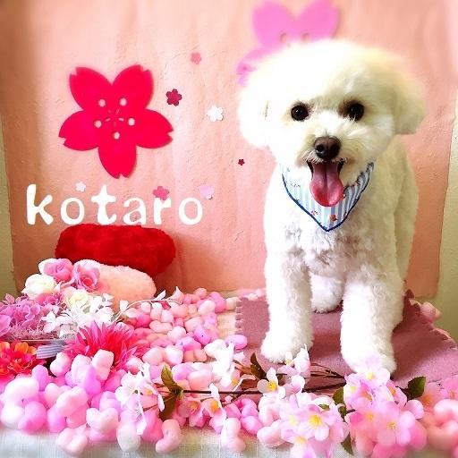 kotaro 岡崎