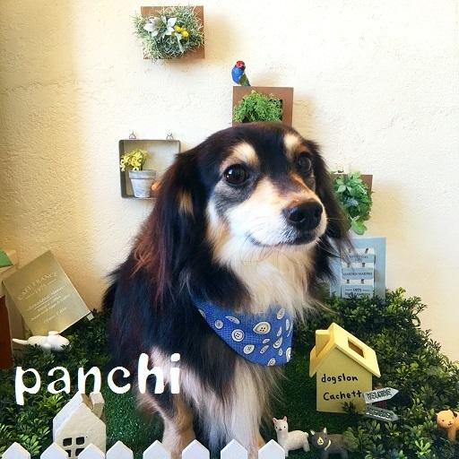 panchi 山本