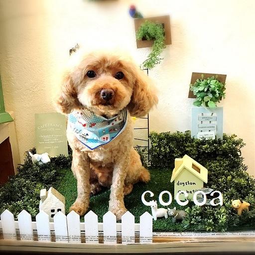 cocoa 田中