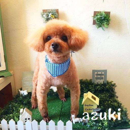 azuki 三宅
