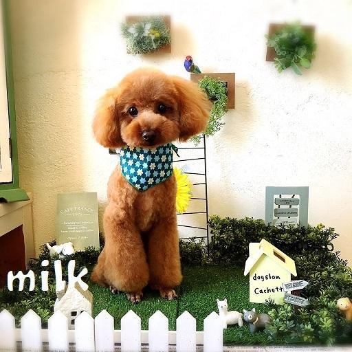 milk 片木