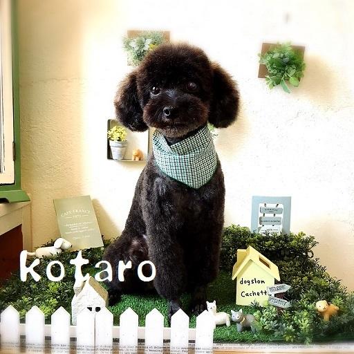 kotaro 宮城島