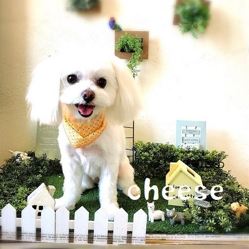 cheese 木村