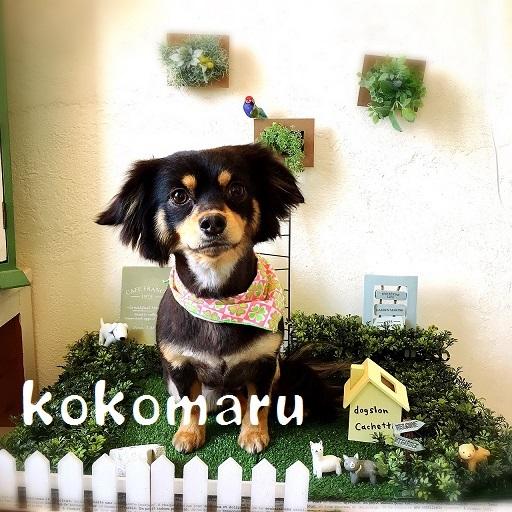 kokomaru 田中