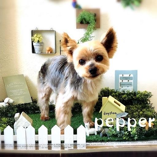 pepper 洪