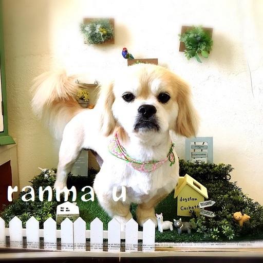 ranmaru 田中