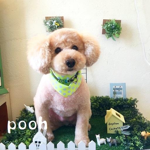 pooh 笠
