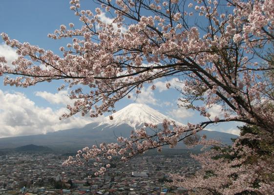 新倉山浅間公園の桜と富士山