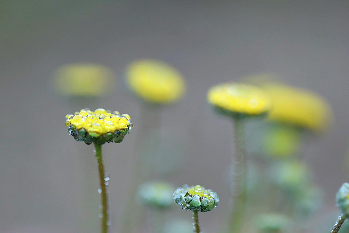 花ホタル2