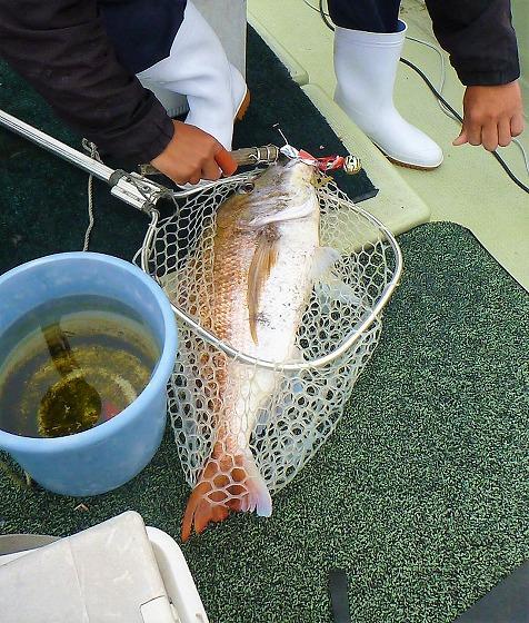 2017.05.05タイ釣り2