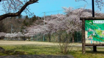丸小山の春