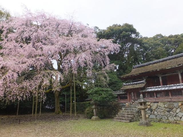 201704kyoto0381.jpg