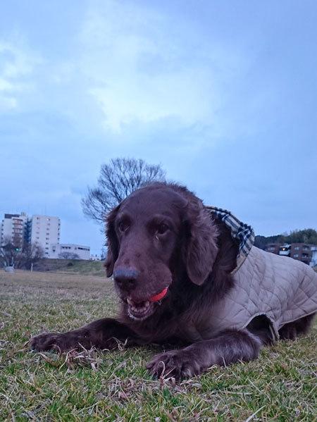 20170302河川敷ナルー