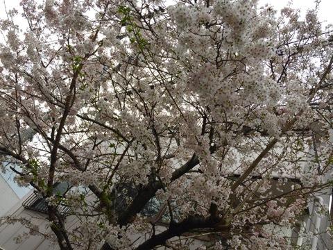 桜 N家-1