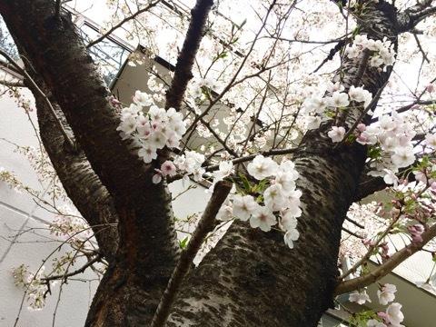 桜 N家-2