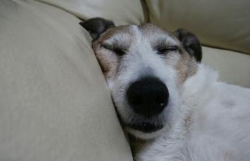 小梅睡眠中