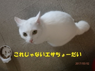 blog170506_1.jpg