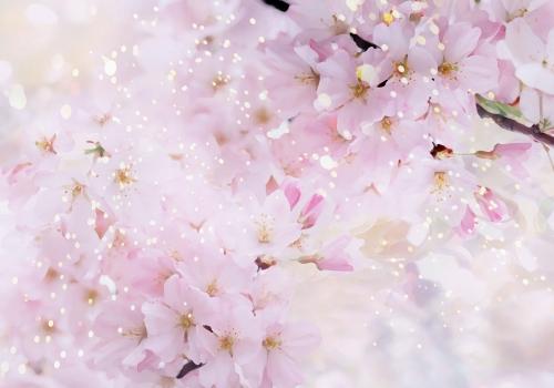 flower-back1103.jpg