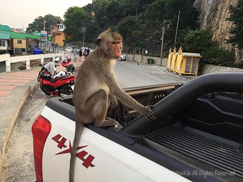 201702KaoSammuk_Thailand-5.jpg