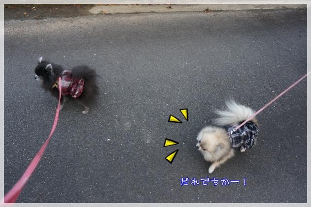 もふ&ぽんず2 17-03