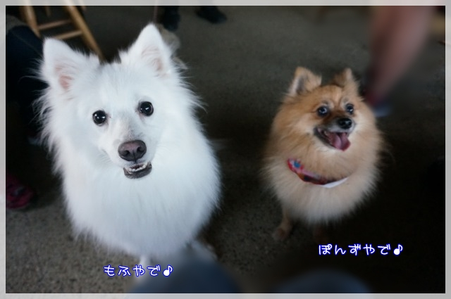 もふ&ぽんず4 17-03