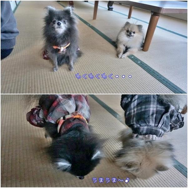 もふ&ぽんず7 17-03