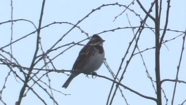 IMG_7049野鳥
