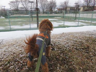 IMG_7159テニスコート