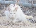 IMG_7319猫