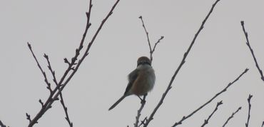 IMG_7340野鳥