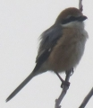 IMG_7345野鳥3
