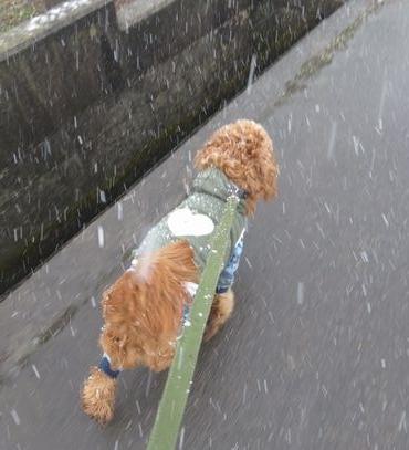 IMG_7433雪降り