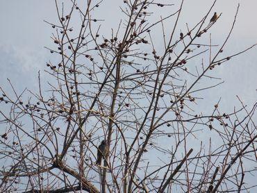 IMG_7528野鳥