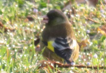 IMG_7732野鳥