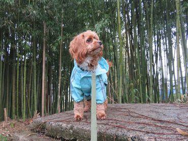 IMG_7831雨散歩