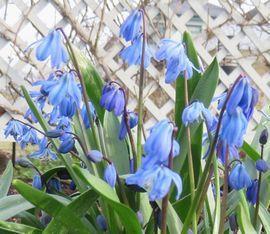 IMG_7863青い花2