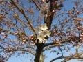 IMG_8004バラ公園