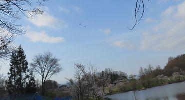 IMG_8135野鳥2