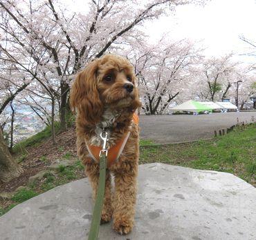 IMG_8189東山公園