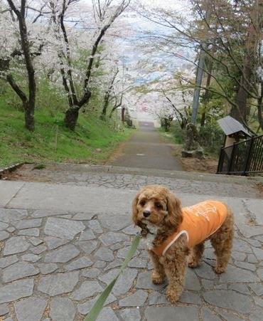 IMG_8192東山公園