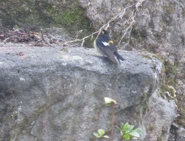 IMG_8239野鳥1