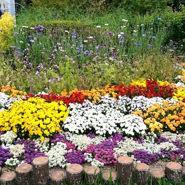 バラ園の前のお花