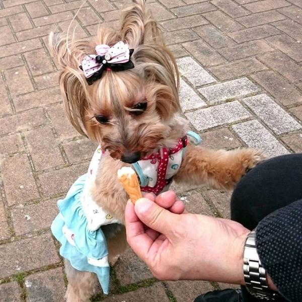 凜ちゃんソフトクリームを食べる